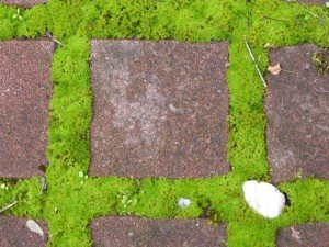 Moss square C T.A. - Spontaneous Vegetation
