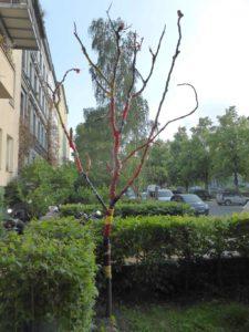 Baum des Konsums. Klara Hartmann