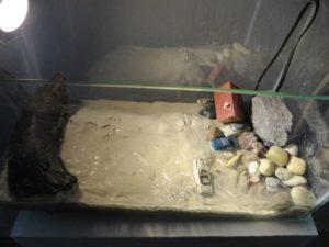 Welche Krise?, Tom Albrecht. Objekt: Aquarium, Pumpe, Wasser, Lehm, Steine, Modellfiguren, -haus, -autos Sintflut heute