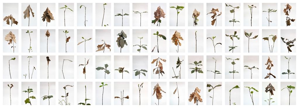 every oak must be an acorn. Simon Knab. 110x320cm, Inkjet-print auf Baryt Fine Art Paper(Matt). 2300€
